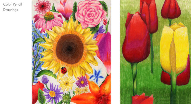 Flowers and tulips drawings